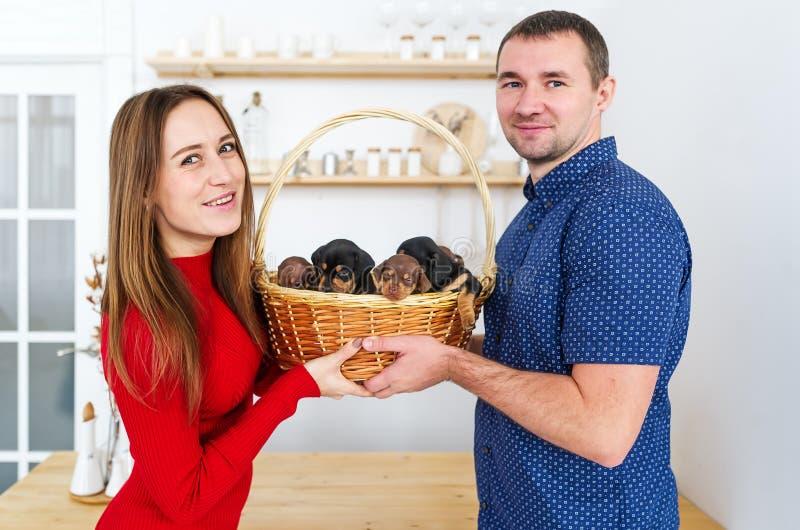 Un par joven y atractivo que se une y que sostiene la cesta con cuatro pequeños perritos de perro basset son el hacer frente imágenes de archivo libres de regalías