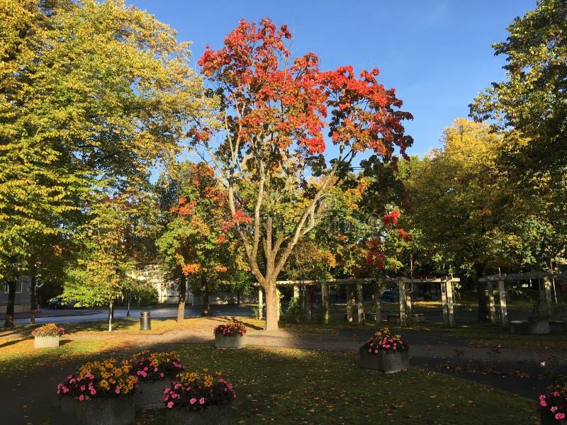 Un parco a Parnu, Estonia fotografia stock
