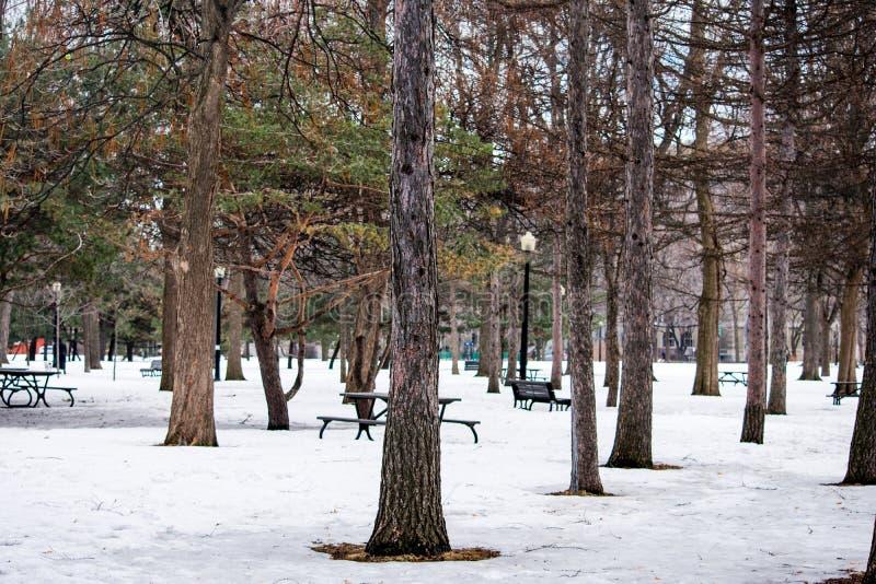 Un parco riempito di alberi e coperto di neve immagine stock