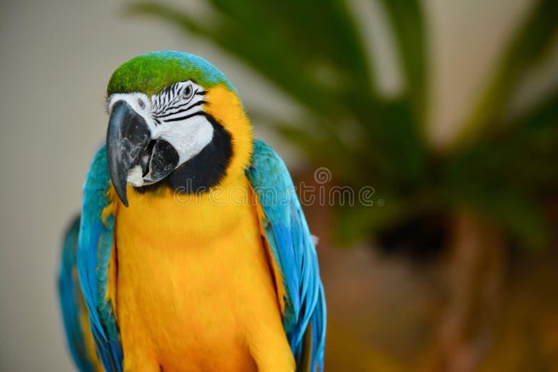 Un parrocchetto colourful al parco dell'uccello di chilolitro immagini stock