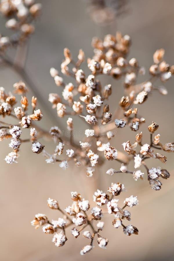 Un particolare di una pianta selvatica gelida immagine stock libera da diritti