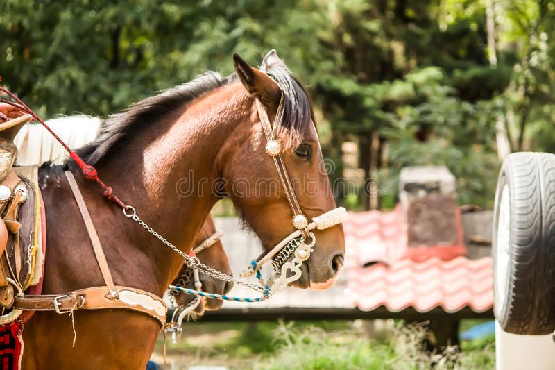 Un paseo del caballo en el bosque imágenes de archivo libres de regalías