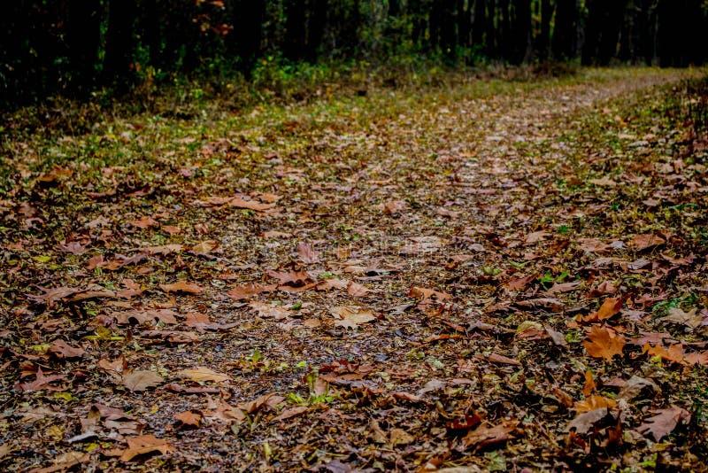 Un paseo del otoño imágenes de archivo libres de regalías