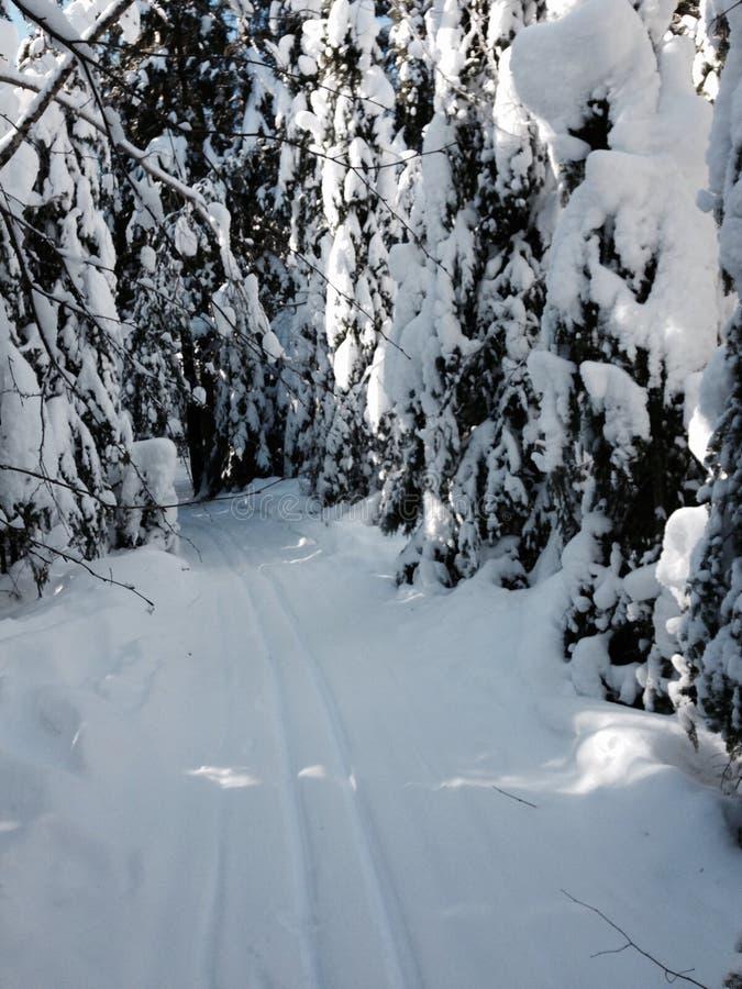 Un paseo hivernal en el bosque foto de archivo