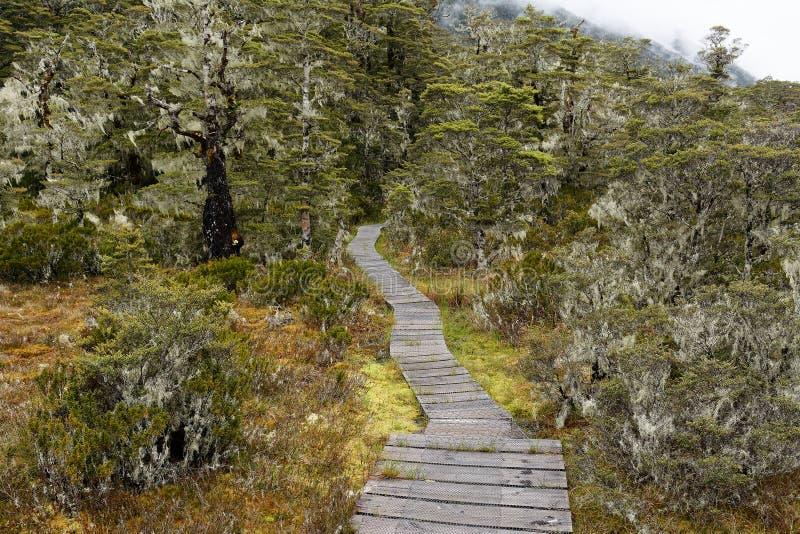Un paseo marítimo de madera enrolla su manera a través de bosque nativo al inicio del paseo de San Jaime del multi-día en Nueva Z imagenes de archivo