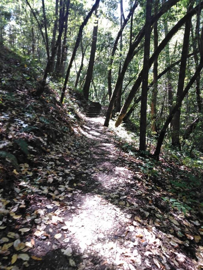 Un paseo simple en el bosque imagenes de archivo
