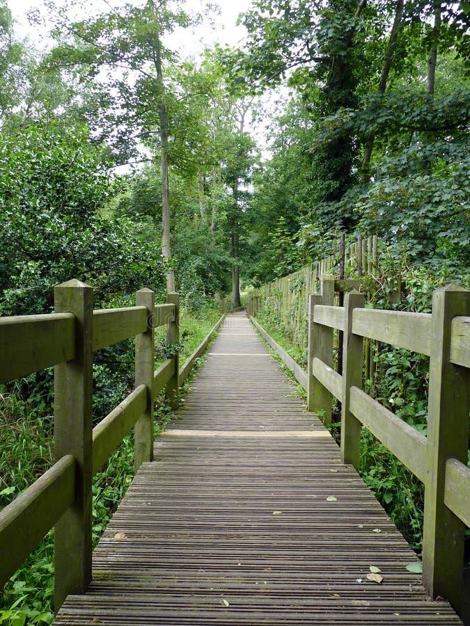 Un passage couvert en bois dans la forêt photo stock