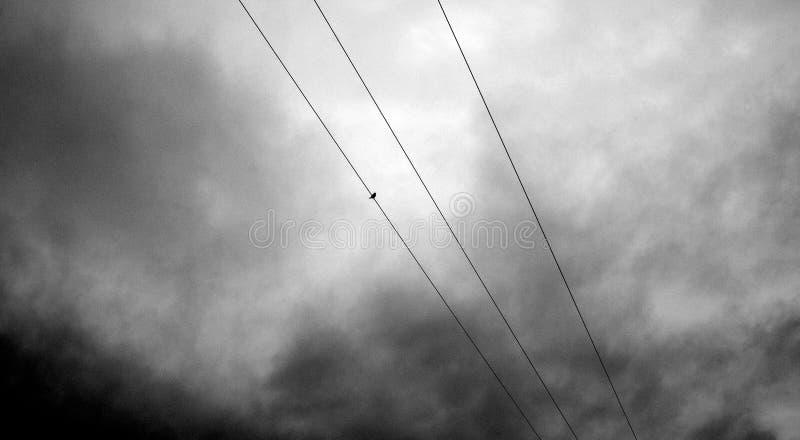 Un passero sta sui cavi dell'elettricità con un cielo poco amichevole scuro qui sopra immagine stock libera da diritti