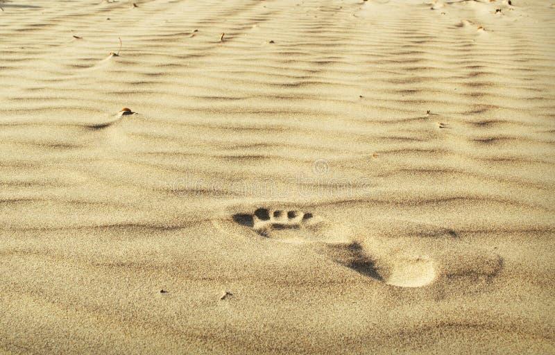 Un passo sulla sabbia fotografie stock