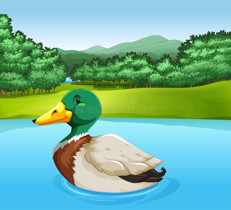Un pato ilustración del vector