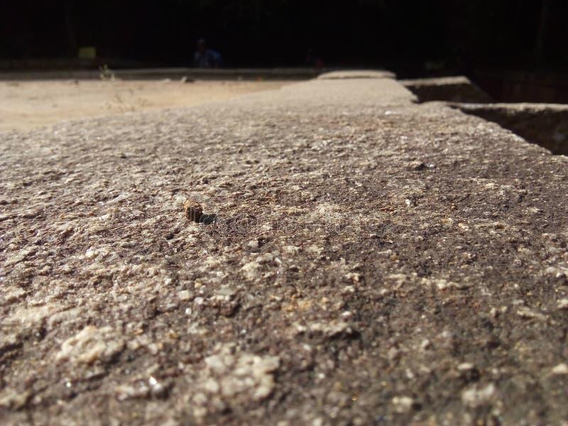 Un pavimento antico del taglio della roccia in ritigala, Sri Lanka fotografia stock