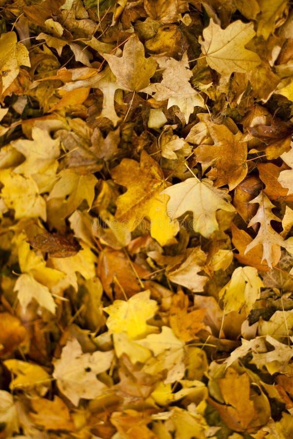 Un pavimento della foresta delle foglie nella caduta fotografia stock libera da diritti