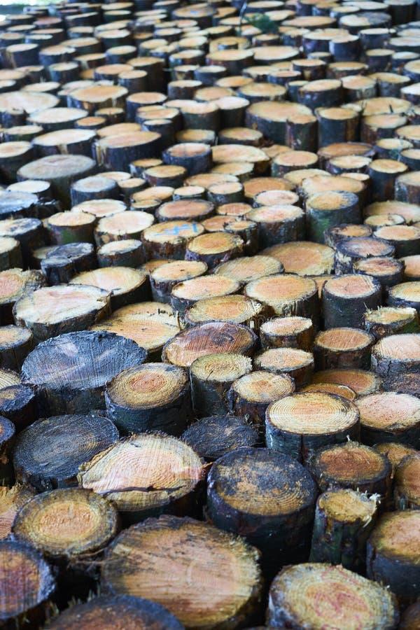 Un pavimento irregolare fatto dell'estremità dei tronchi di albero tagliati fotografie stock libere da diritti