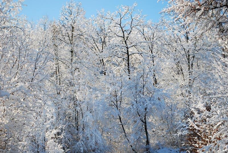 Un paysage d'un bel hiver photographie stock libre de droits
