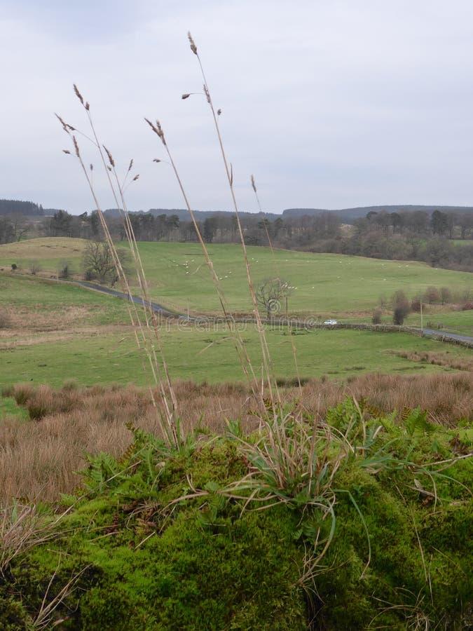 Un paysage de campagne avec des brins d'herbe grande dans le premier plan photographie stock libre de droits