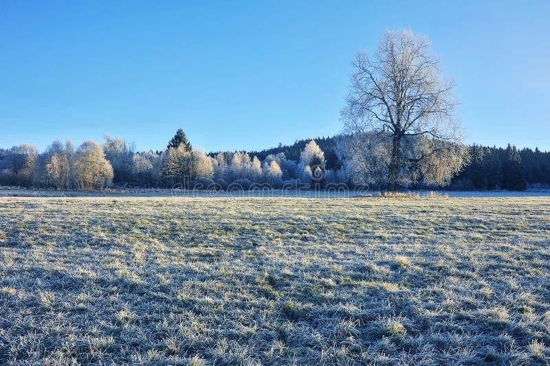 Un paysage gelé d'hiver image libre de droits