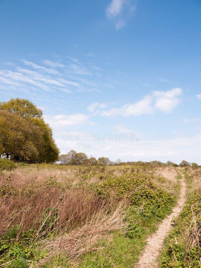 Un paysage luxuriant gentil a tiré de la terre d'arbuste dans des WI de campagne d'essex images libres de droits