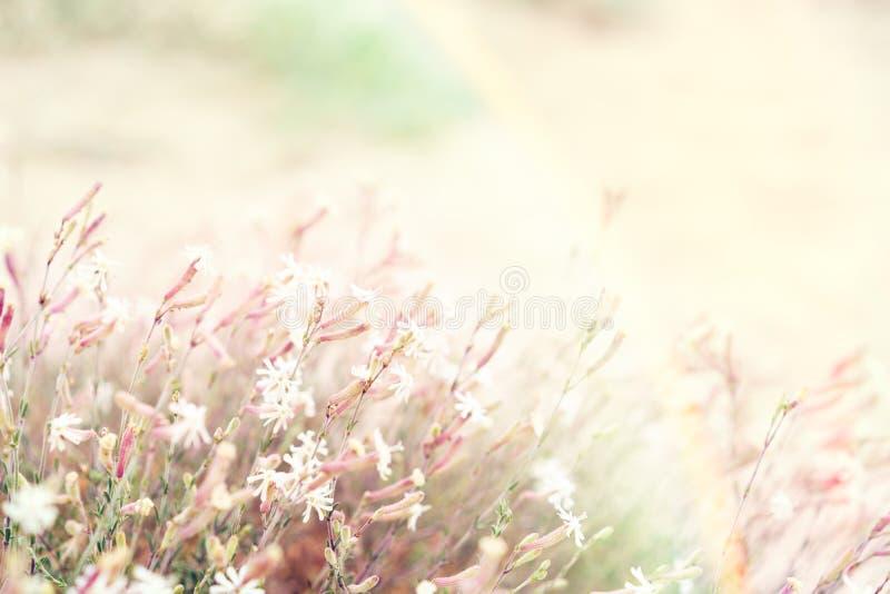 Un paysage mystérieux avec un arc-en-ciel ensoleillé avec des fleurs et le gra images libres de droits