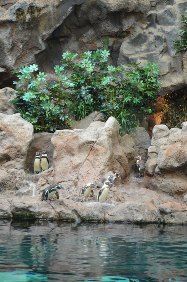 Un pedazo de la Antártida con los pingüinos en las zonas tropicales imagenes de archivo