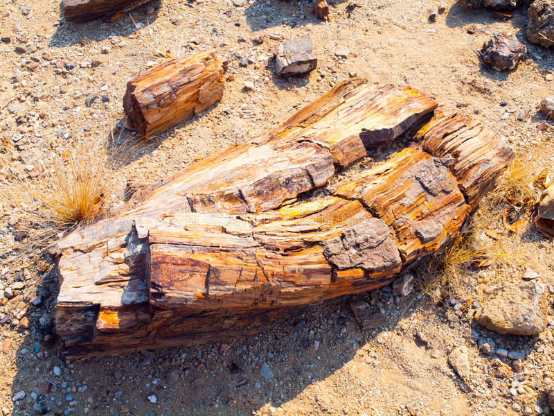 Un pedazo de la madera aterrorizada, bosque aterrorizado en Damaraland, Namibia, África fotos de archivo
