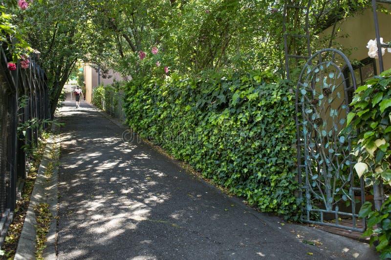 Un pedone cammina attraverso il sole pezzato sul percorso di taglio in Berkeley, CA immagine stock