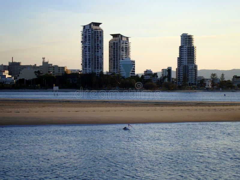 Un pelícano solo en Gold Coast en Australia foto de archivo