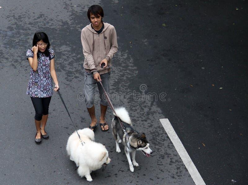Un peliharaanya del perro de los pares que lleva jovenes en el día a solas a del coche libremente imágenes de archivo libres de regalías