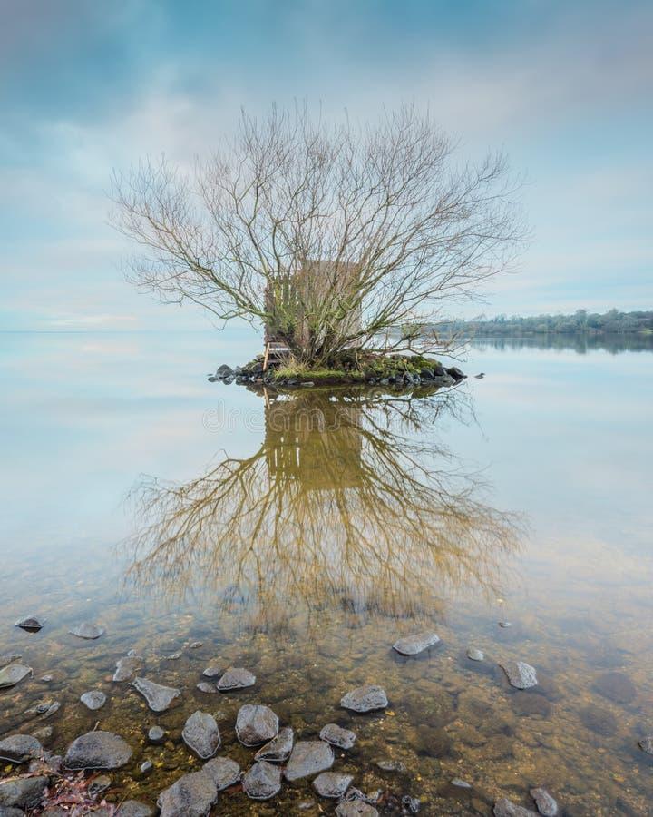 Un pellame selvaggio-fowler's, Lough Neagh immagine stock libera da diritti
