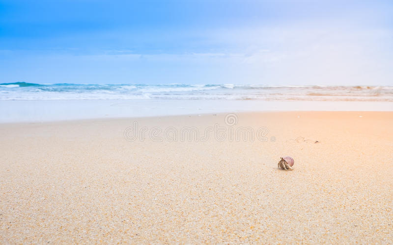Un pequeño cangrejo de ermitaño en la playa hermosa fotografía de archivo