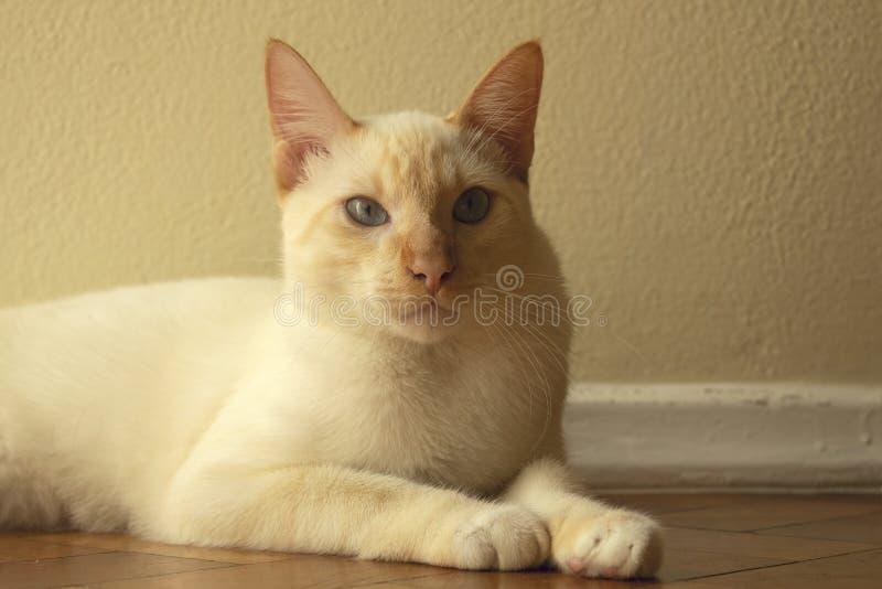 Un pequeño cierre lindo del gato para arriba El gato está mirando la cámara imagen de archivo libre de regalías
