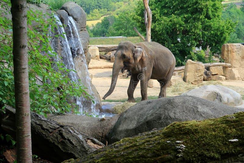 Un pequeño elefante indio que camina por una cascada imagenes de archivo