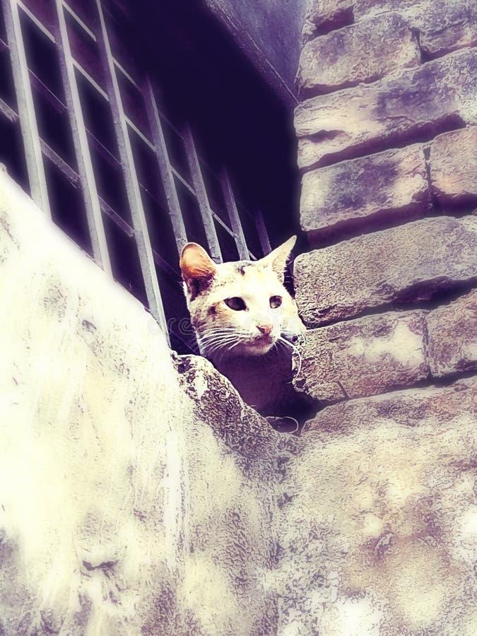 Un pequeño gatito imagenes de archivo