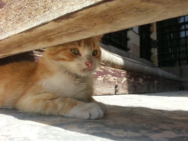 Un pequeño gatito imagen de archivo libre de regalías