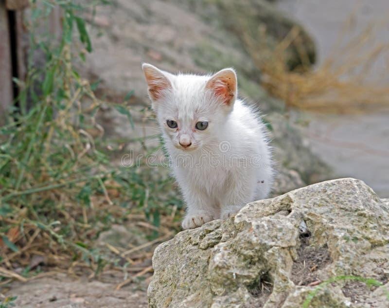 Un pequeño gatito blanco hermoso fotos de archivo