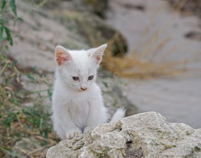 Un pequeño gatito blanco hermoso fotografía de archivo