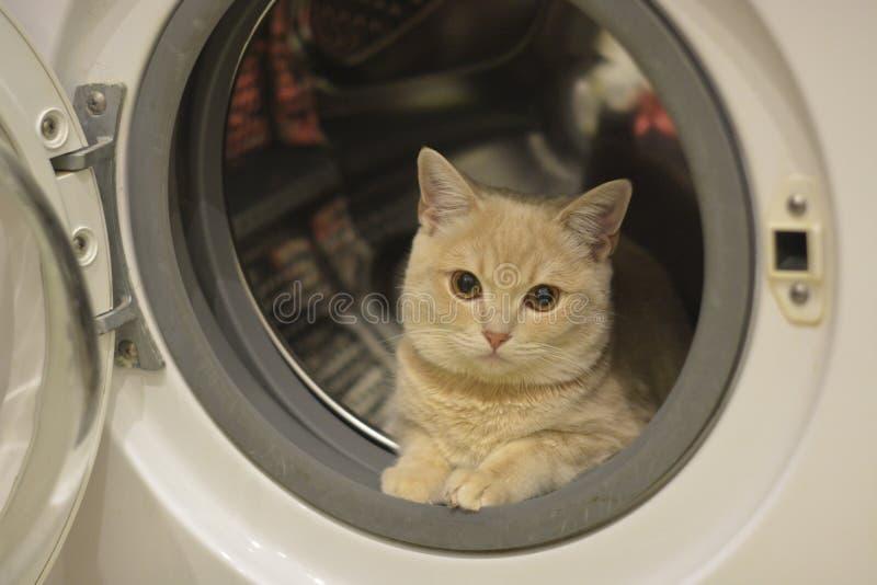 Un peque?o gatito est? en la lavadora imagen de archivo