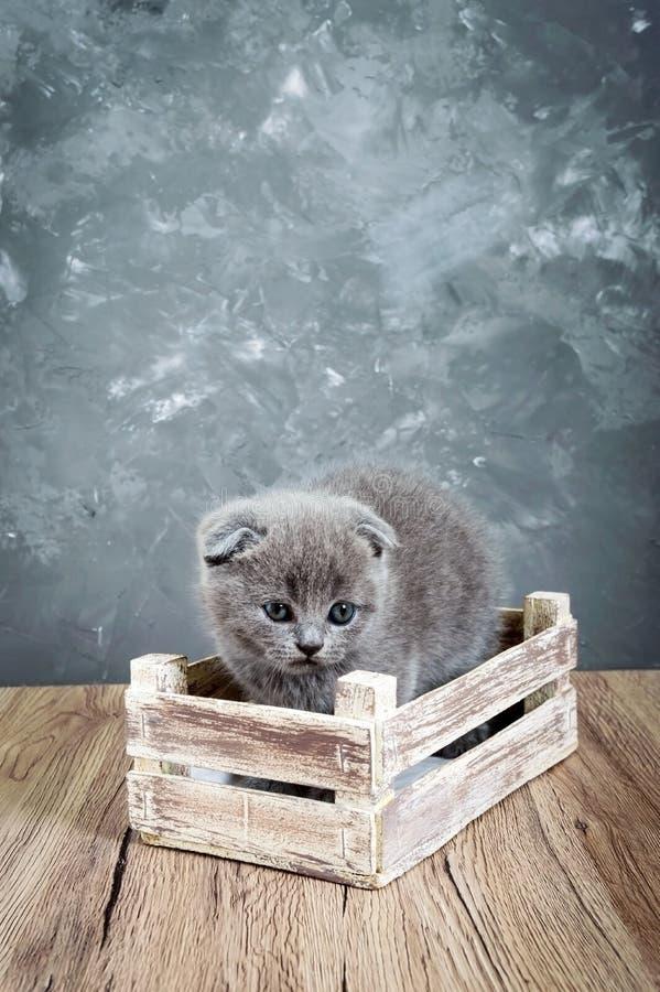 Un pequeño gatito gris del doblez del escocés se sienta en una caja de madera El gatito fue asustado imagenes de archivo