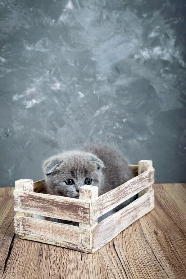 Un pequeño gatito gris del doblez del escocés se sienta en una caja de madera El gatito fue asustado y ocultado fotos de archivo