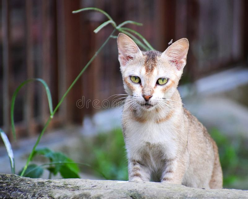 Un pequeño gatito juguetón imagenes de archivo