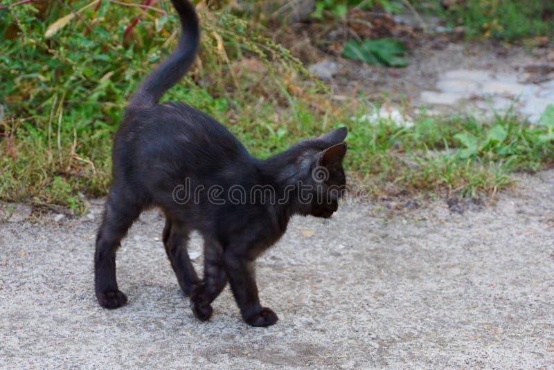 Un pequeño gatito negro se coloca en un camino gris cerca de una hierba verde foto de archivo