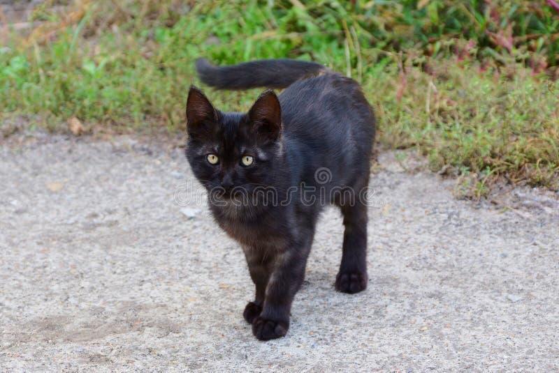 Un pequeño gatito negro se coloca en un camino gris cerca de una hierba verde fotos de archivo