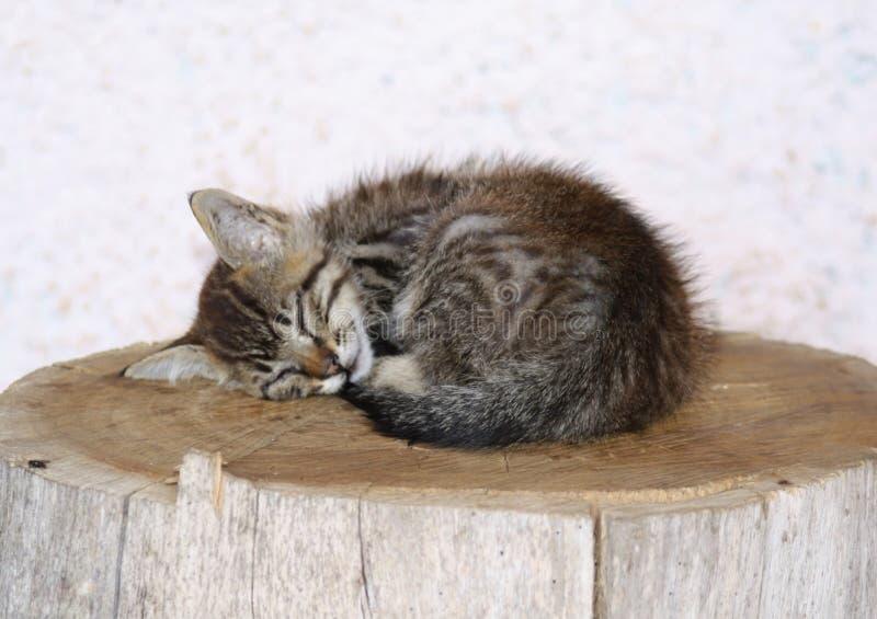 Un pequeño gatito tan soñoliento en mi pelotón en el la Palma fotos de archivo libres de regalías