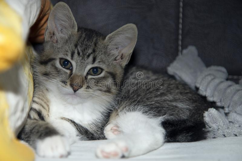 Un pequeño gato perdido, ahora nacional imagen de archivo