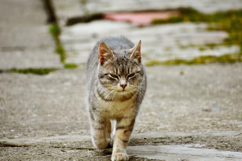 Un pequeño gato que camina en la yarda foto de archivo libre de regalías
