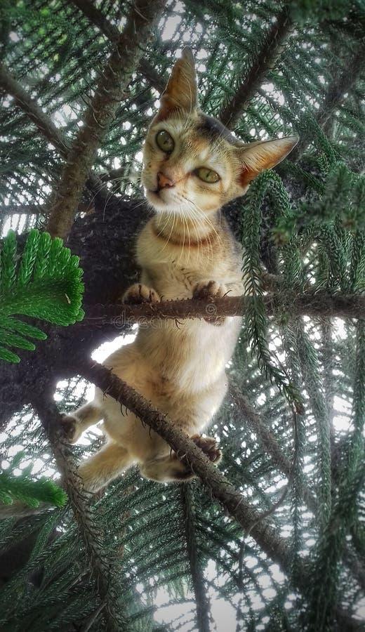 Un pequeño gato que mira fijamente del árbol imagenes de archivo