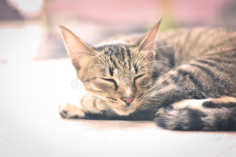 Un pequeño gato que toma una siesta fotos de archivo libres de regalías