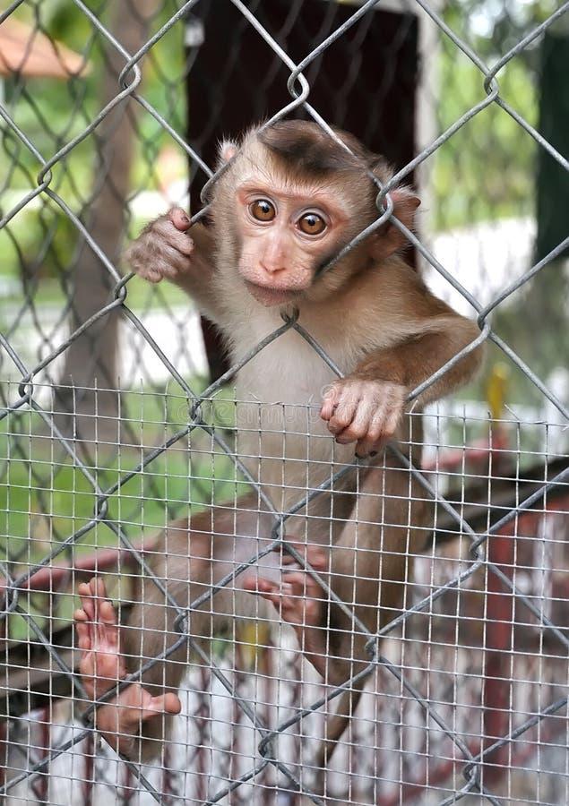 Un pequeño mono triste fotografía de archivo