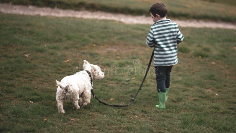 Un pequeño muchacho camina un Westie a través de un parque fotografía de archivo libre de regalías