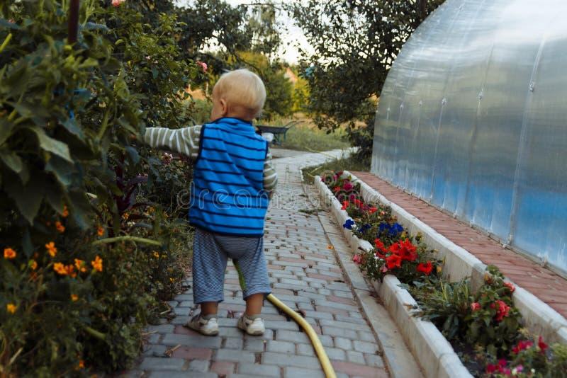 Un pequeño niño camina a lo largo de una trayectoria al lado de una cama de flor, examina las flores foto de archivo