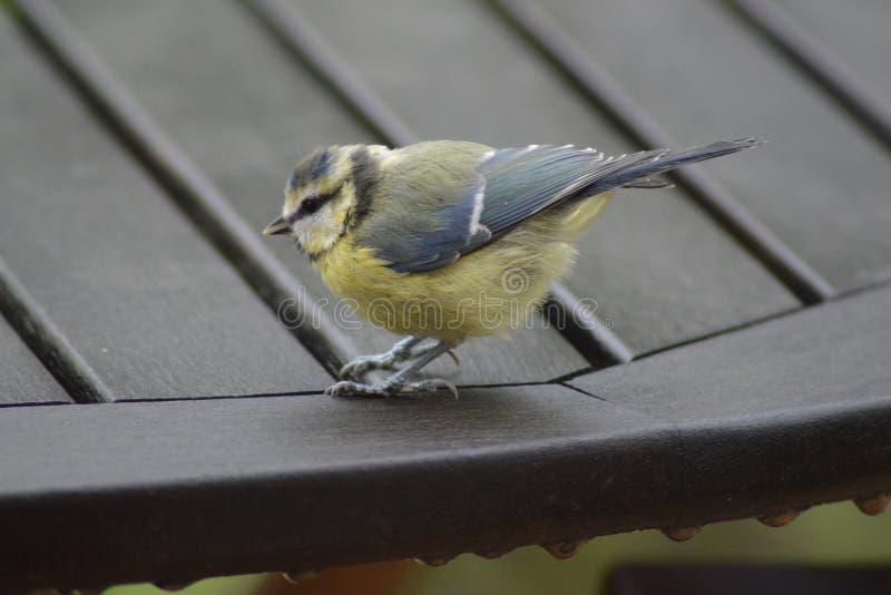 Un pequeño pájaro foto de archivo